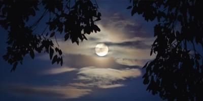 4+hojas+luna.jpg