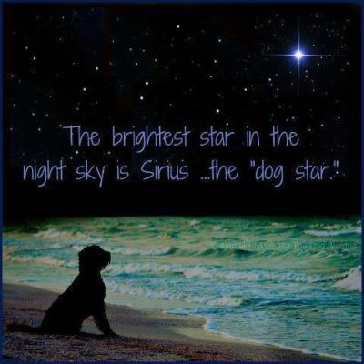 dog+star.jpg