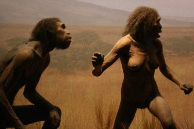 1435410033_homo-erectus-140613.jpg