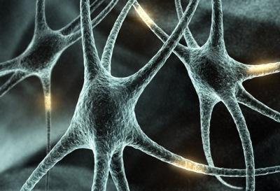 _neuronas.jpg