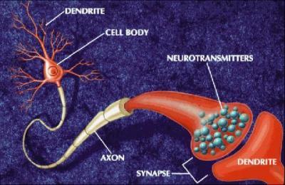 neurotransmisor%2B1.JPG
