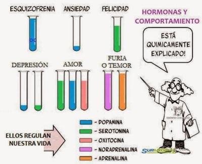 hormonas+y+comportamiento.jpg